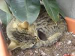 little cat sleeping