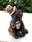Dapper French Bulldog