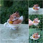 Teacup Fox