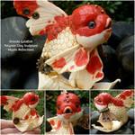 Red and White Oranda goldfish