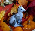 Gray Pegasus