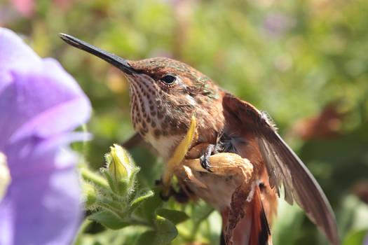 Dizzy hummingbird.
