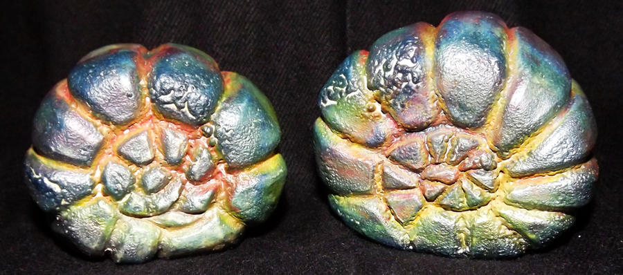 Raku Nautilus Shell Rattles by Mindslashed
