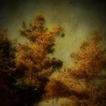 Harmony + Saucerful of Secrets by bindii