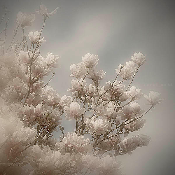 so soft and fragile... by bindii