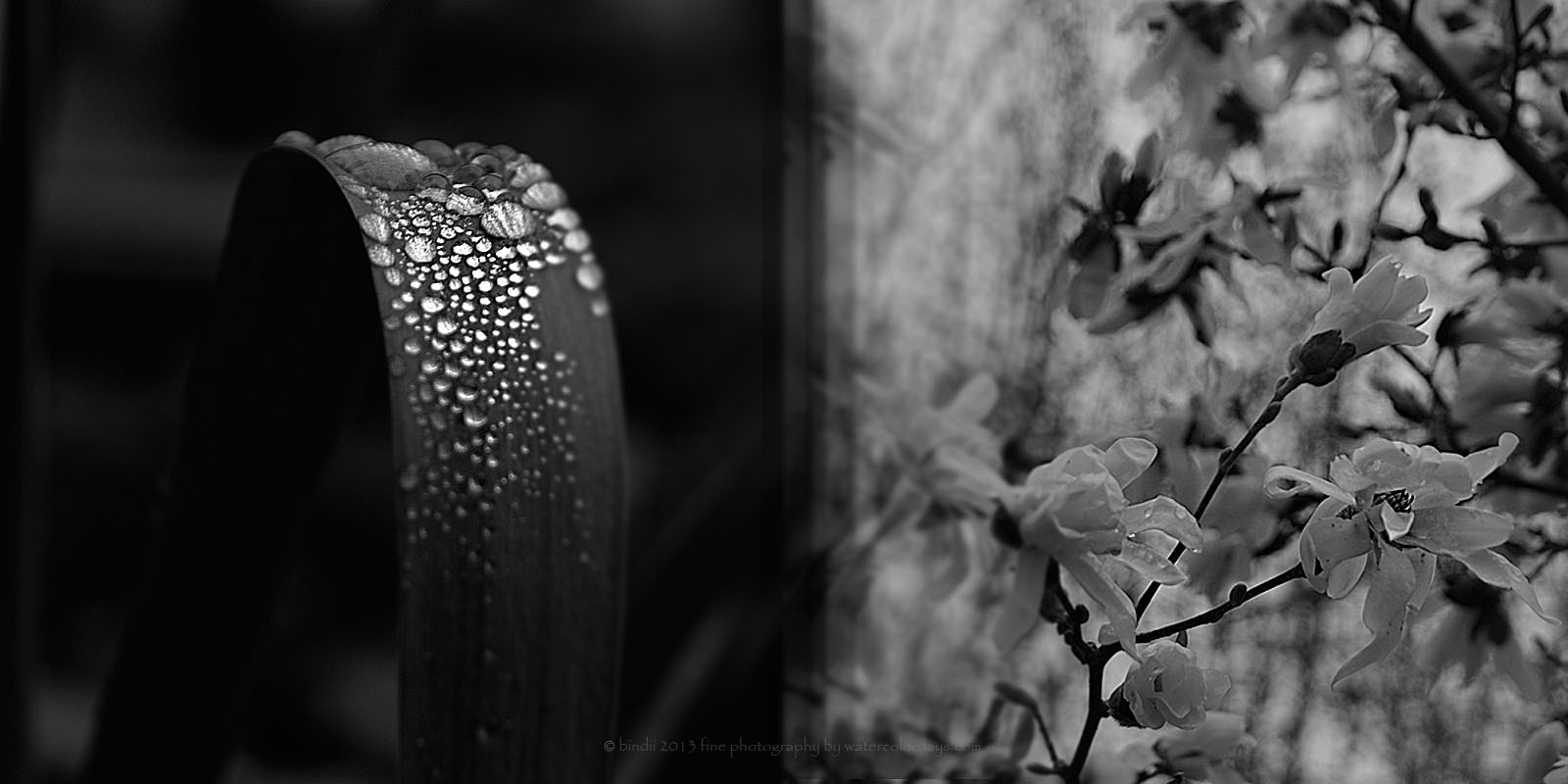 A spring dipitch... :) Dark and rainy... by bindii