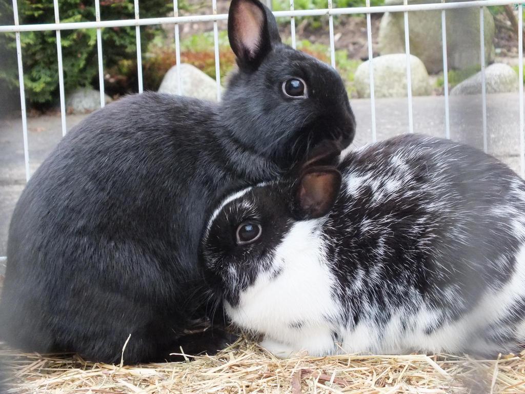 Bunny Love by SorayaHikari