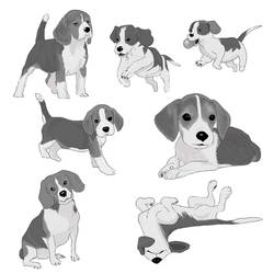 I ve been drawing dogs for a project ...