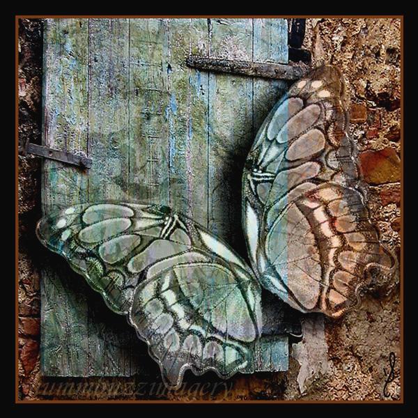 Moth, le deux by hummbuzz