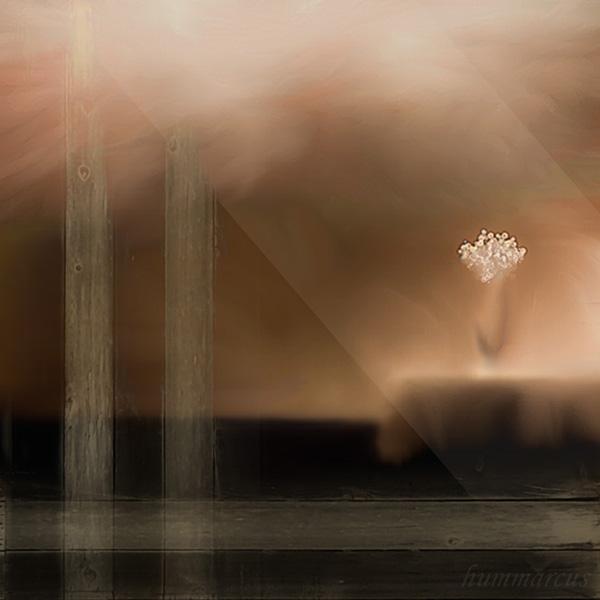 fiori e luce . . . a hummarcus collaboration by hummbuzz