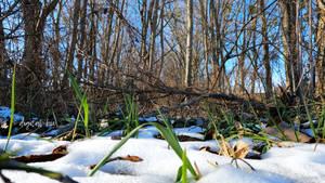 snow landscape (4)
