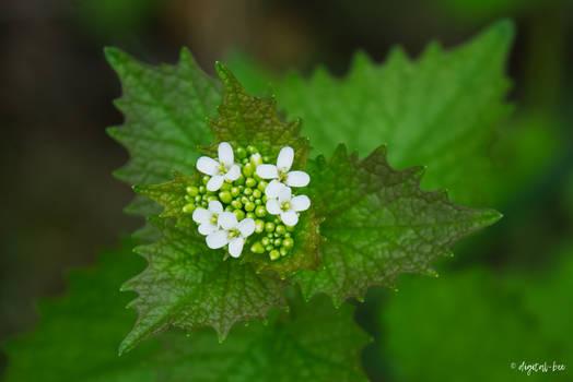 some flower (10)