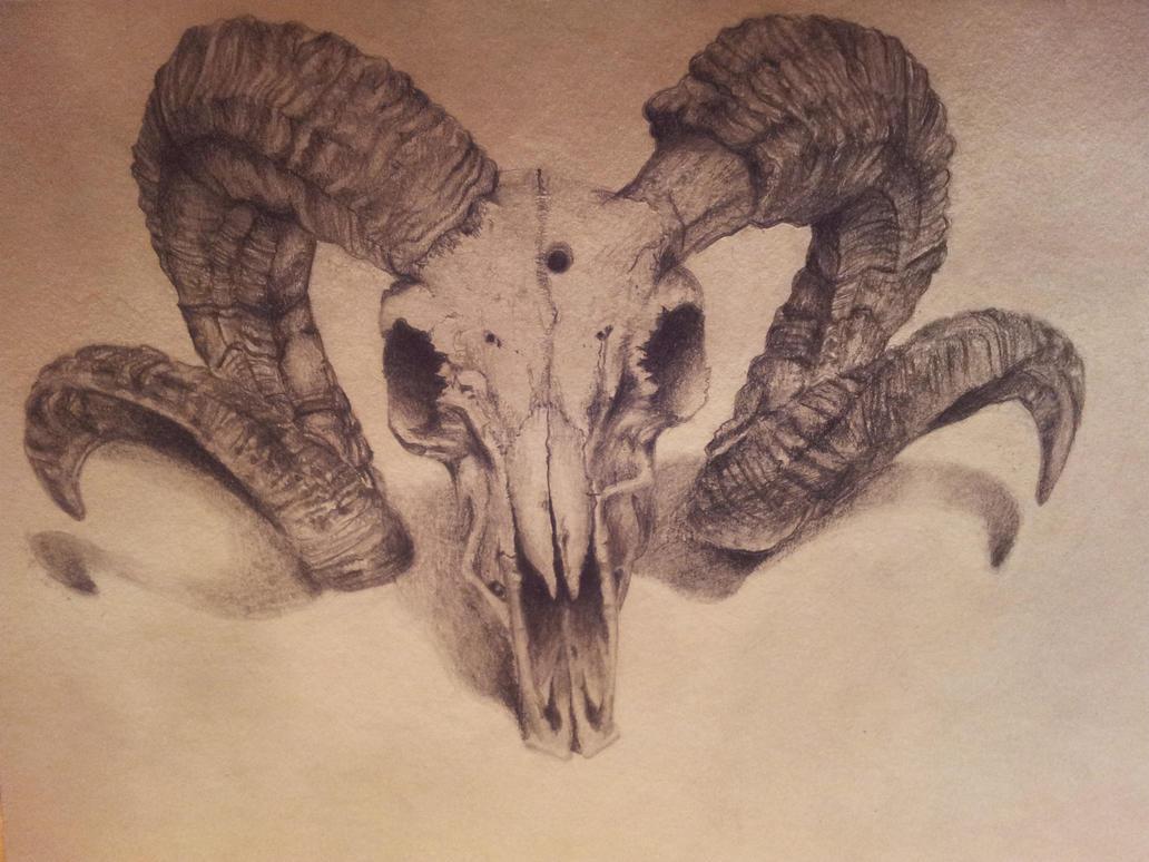 Ram Skull by backhendl on DeviantArt