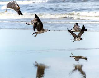 Seagulls in Flight by JennDixonPhotography