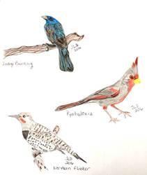 Three Birds by JennDixonPhotography