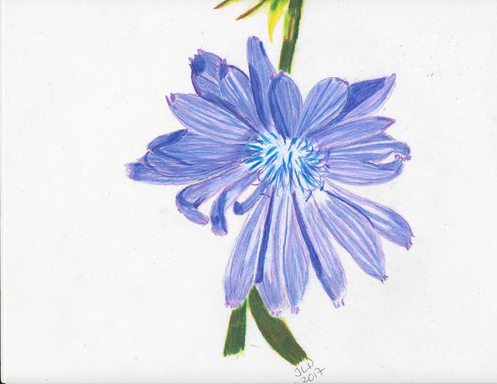 Purple Flower by JennDixonPhotography