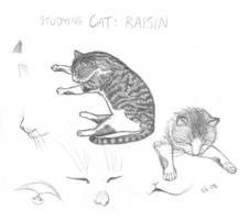 Studying cat: Raisin by Zeggolisko