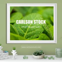 CarlsonStock