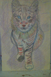 Cat Maggie by lothairebeaumont