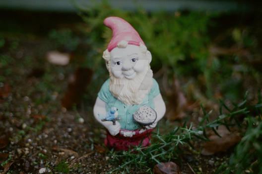 The Welcoming Gnome