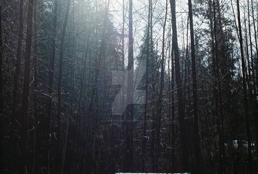 cold december woods