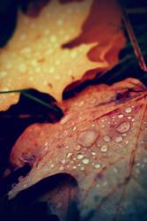 leafy droplets by TrishaMonsterr