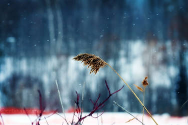winter sway by TrishaMonsterr