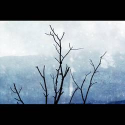 winter at Mt.Greylock by TrishaMonsterr