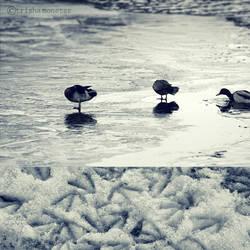 winter duckies by TrishaMonsterr