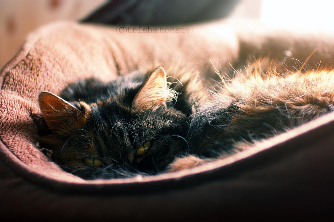 sleepy cat by TrishaMonsterr