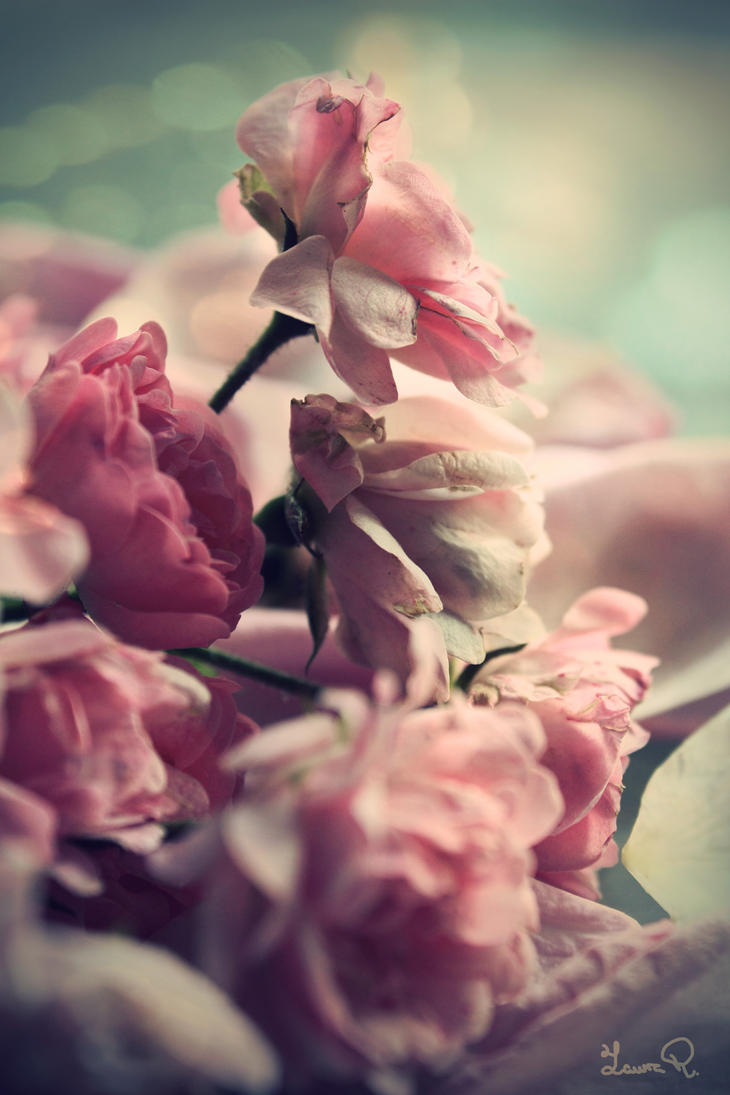 Vintage Roses By LunaDulcinea