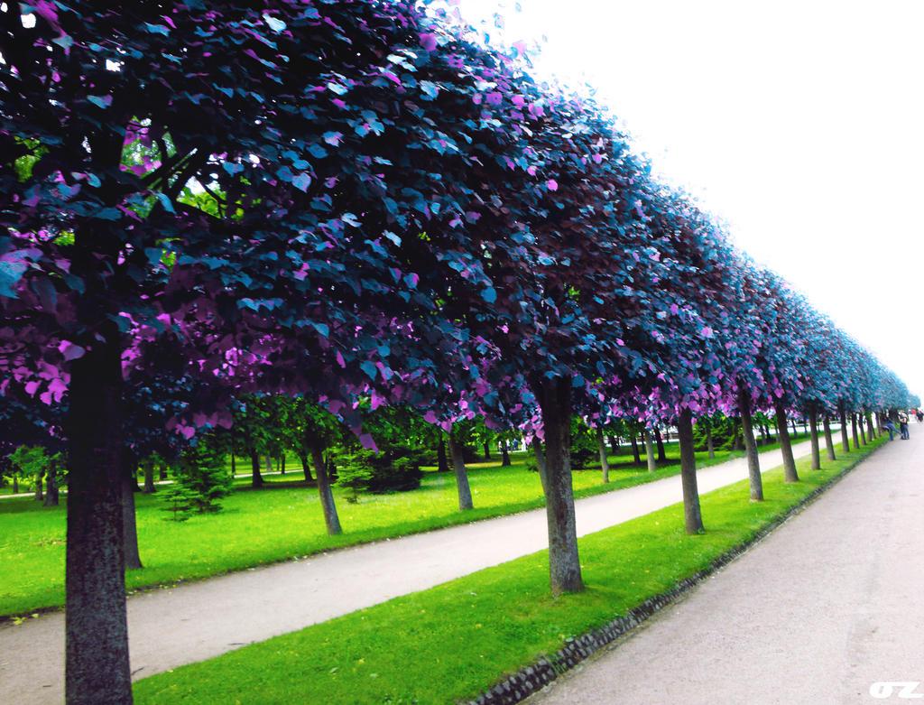 Purple by SawyerAFK
