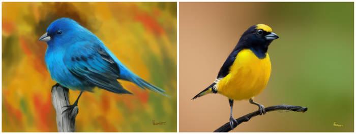 Bird Studies by HELMUTTT
