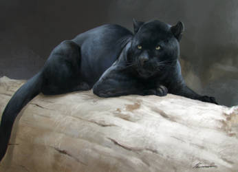 Jaguar by HELMUTTT