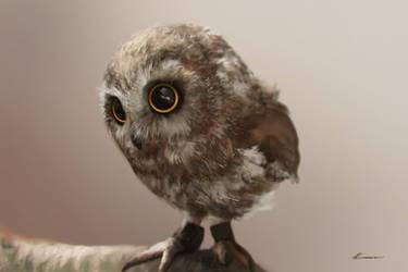 Cute Owl by HELMUTTT