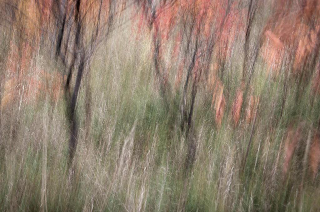Sumac Blur by pl1602