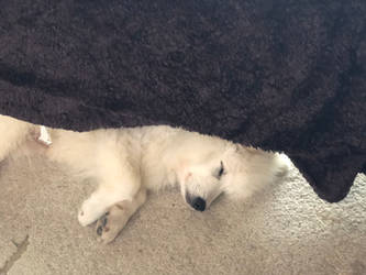 Freya asleep by SevenSidedCube7
