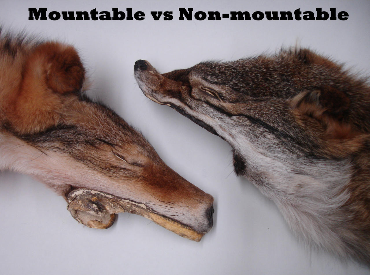 Mountable VS Non-Mountable by AcidConfetti