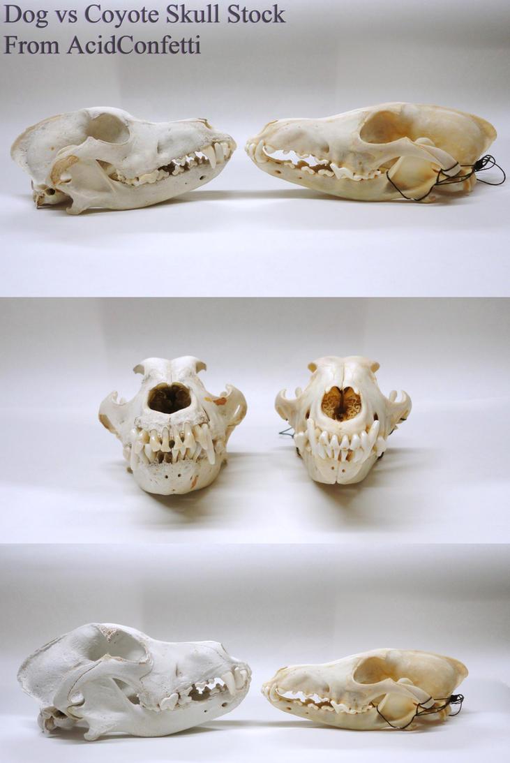 Dog vs Coyote Skull Stock by AcidConfetti