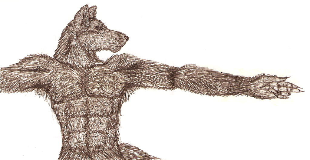 Anthro Wolf Male Male Anthro Wolf by