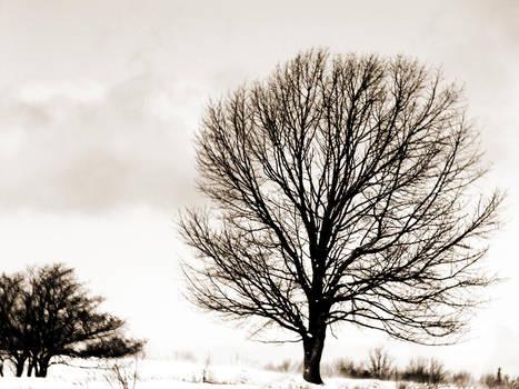 Tree of Nightmares