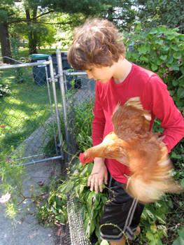 Chicken Free Garden