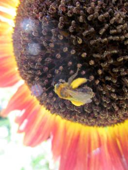 Sunny Bee