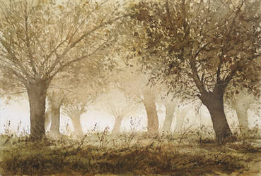 willows... by stefanzhuty