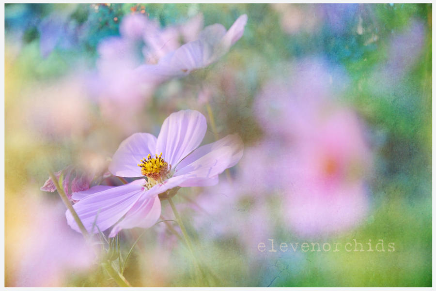 Reaching for the Cosmos. . . by ElevenOrchids