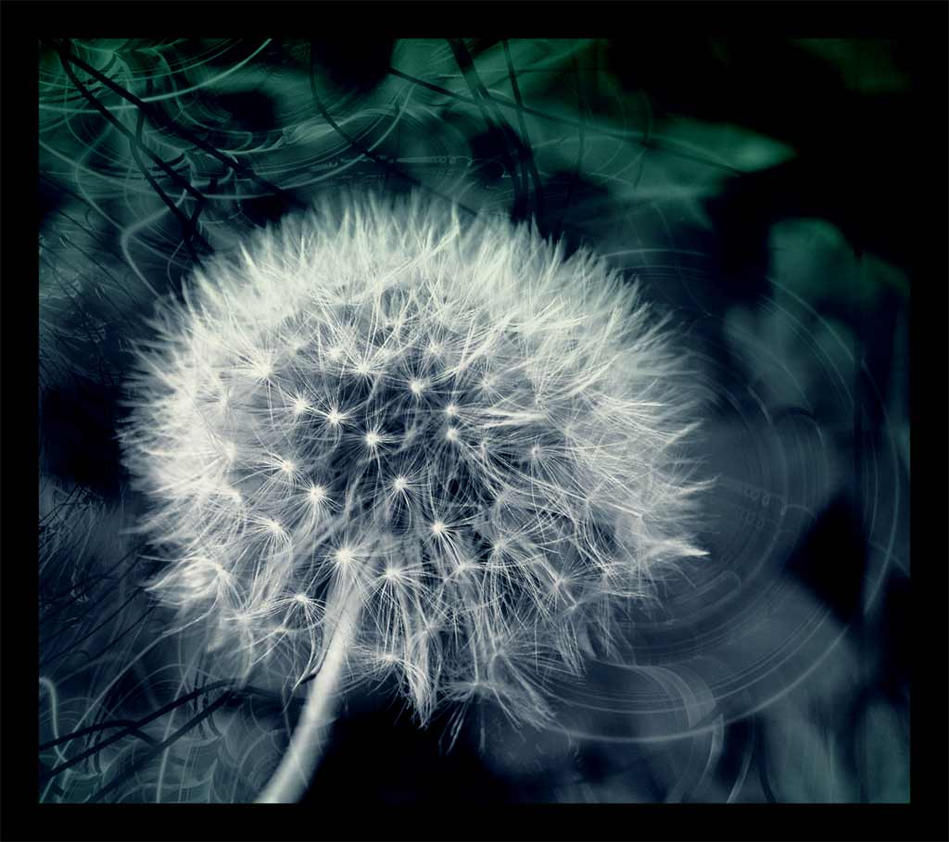 dandelion magic by LinaBrash