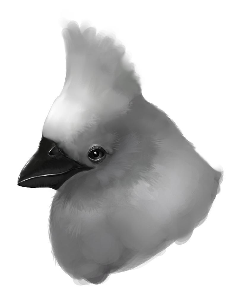 Bird head by Ballonqccity