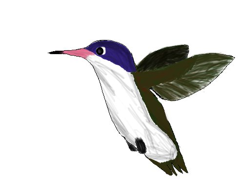 hummingbird by Ls-claws