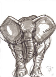 African Elephant by DjDontTouchTheTrim