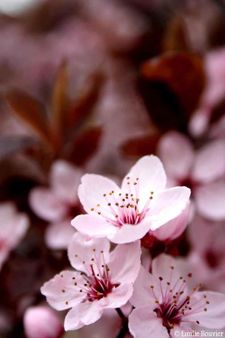 Fleurs by EmilieBouvier